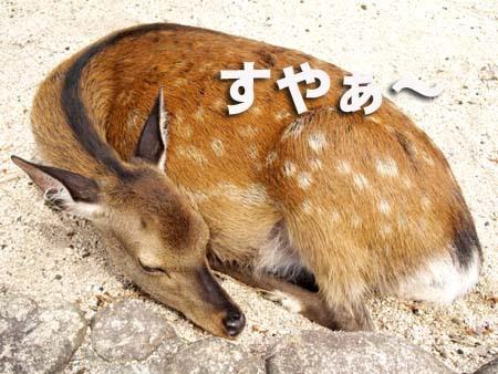 3 美人 すやぁ〜.jpg