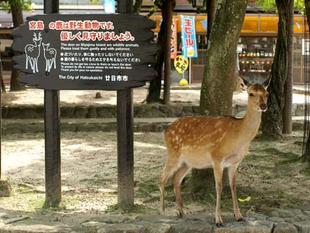 3 美人 鹿の取り扱い注意看板.jpg