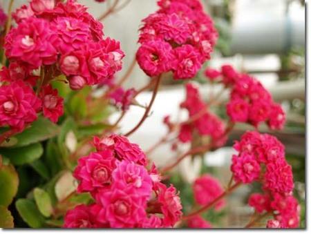5美人になる方法 赤い花.jpg