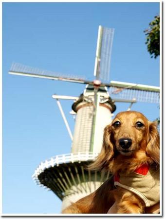 5美人になる方法 風車とワンコ.jpg