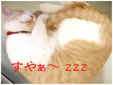 6すや〜zzz.jpg