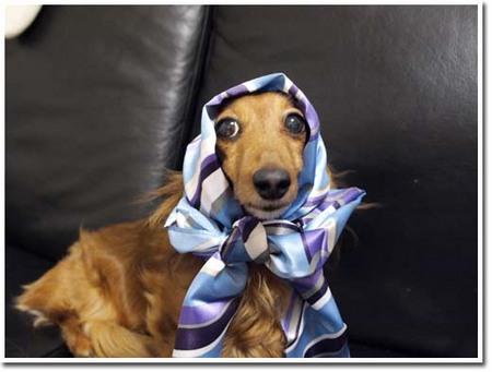 6美人になる方法  スカーフ巻いてみました。.JPG