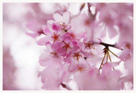 6美人になる方法 桜桜.jpg