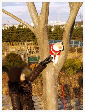 6美人になる方法 木登りニャンコ.jpg
