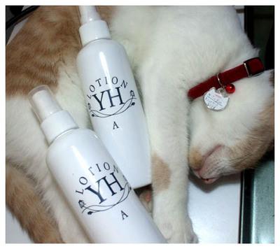 8YHとネコ.jpg