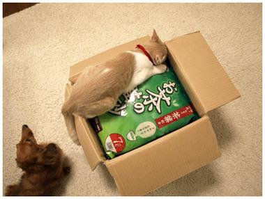 8猫砂届いたよ〜.jpg