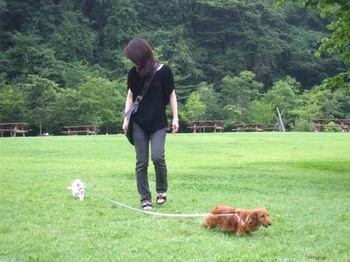 ワンニャン散歩.jpg