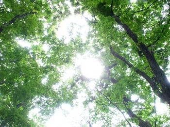 森林と太陽.jpg