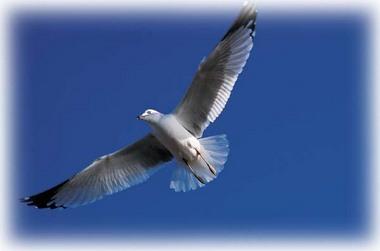 鳥になる.jpg
