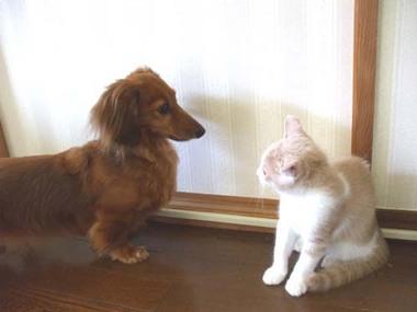 猫にらみ合い.jpg