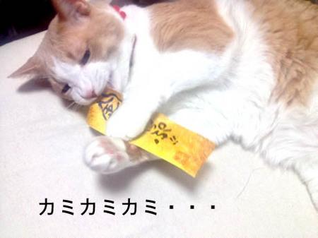 マイコー栞ぐちゃぐちゃ1.JPG