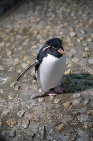 大阪 ペンギン.jpg