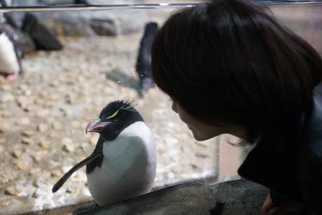 大阪 ペンギンとワタナベ2.jpg