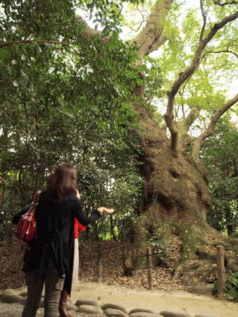 木の氣を感じてます.jpg
