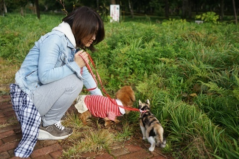 栗 モモ&ミー散歩.jpg