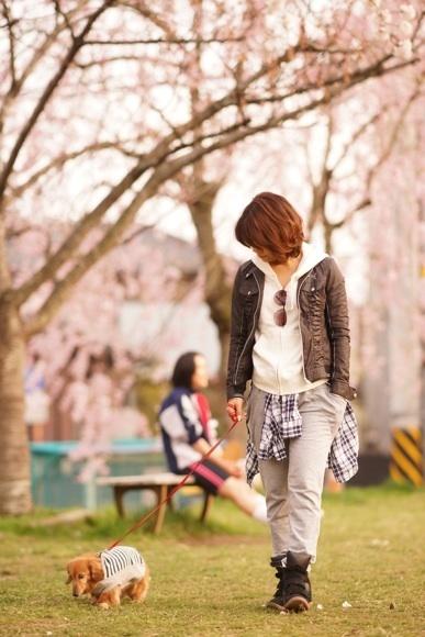 桜 モモと散歩.jpg