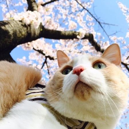 桜・マイケルと桜.jpg