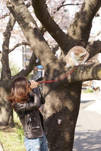 桜・ワタナベマイケルを撮る.jpg