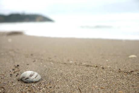 海 貝殻.jpg