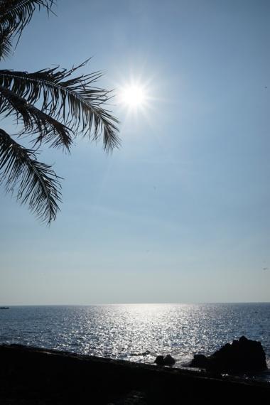 海とヤシの木.jpg