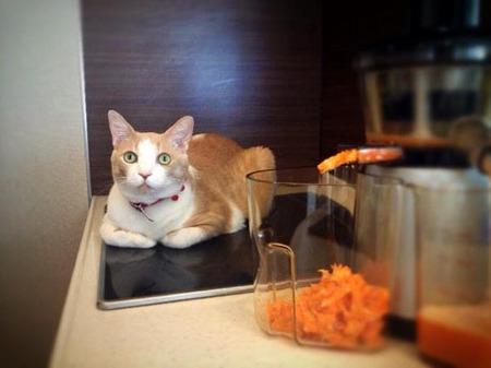 FBマイコーと野菜ジュース.jpg